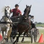 lovas-egyesulet2